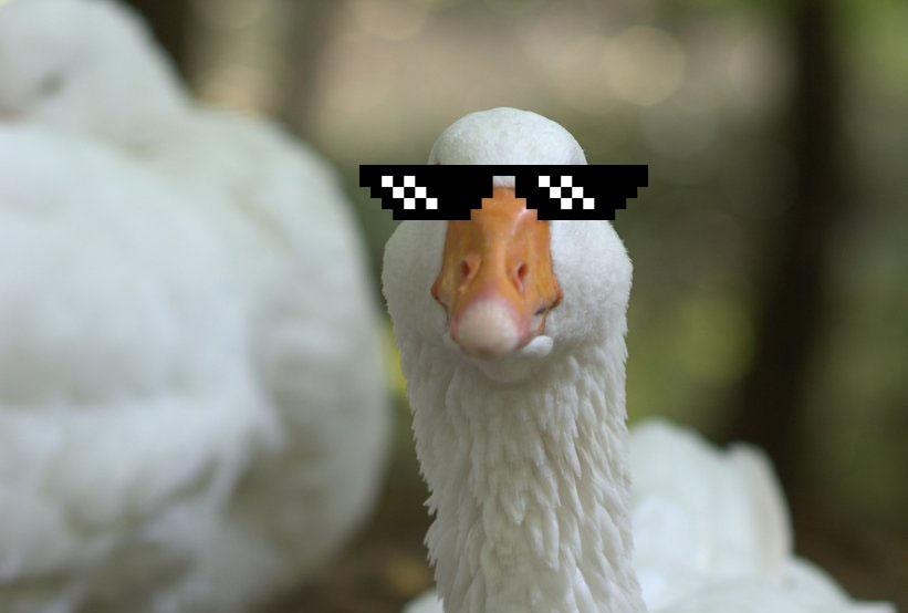 Traitorous Goose